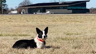 Bentonville Airport Employs 'Goose Dog' Called Flyaway Wyatt To Clear Runways