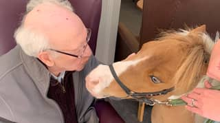 Photos Show Dementia Sufferers 'Overjoyed' After Visit From A Miniature Horse
