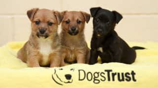 Dogs Trust Ireland launch petition against illegal sale of dogs