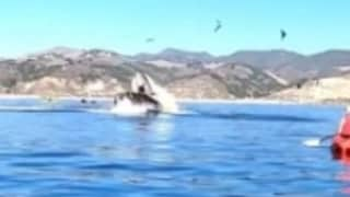 Humpback Whale Almost Swallows Up Two Women