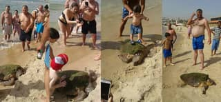 Turtle Dragged Out Of Water And Beaten With A Stick For Pleasure