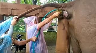 Elephant Poo Explodes In Vet's Face As He Helps Solve Animal's Constipation
