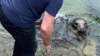 Tourist Bitten By Famous Sammy The Seal Rushed To A&E