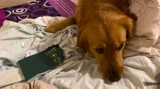 Woman Stopped From Going To Wuhan After Dog Eats Her Passport