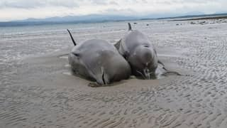 Seven Whales Have Died After Becoming Stranded On Irish Beach