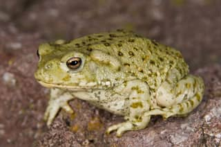 Porn Star Held By Police After Man Dies From Inhaling Poisonous Toad Fumes