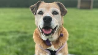Staff Desperate For Dog Who Has Spent 11 Years In Kennels To Find A Home