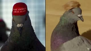Pigeons With MAGA Hats And Donald Trump-Style Hair Seen In Las Vegas