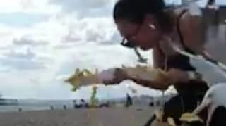 Woman Screams And Runs As Flock Of Seagulls Dive-Bomb Her Chips