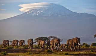 China To Ban Ivory Trading In March 2017