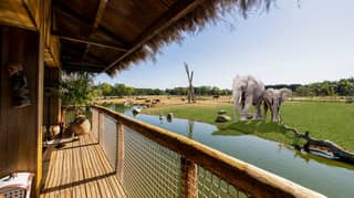 UK Safari Park Forced To Delay Launch Of Luxury Lodges Due To Coronavirus