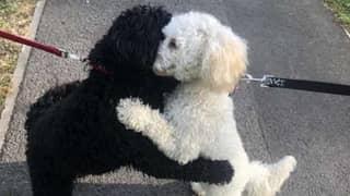 Dog Siblings Separated As Puppies 'Remember Each Other' And Share Hug