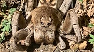 Reddit User Shares Terrifying Photo Of Back Yard Spider That Looks Like 'Aragog'