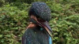 Kingfisher Filmed Performing A Head Rotation Straight Out Of The Exorcist