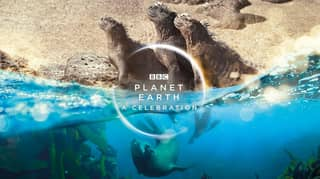 Sir David Attenborough And Dave Team Up For Planet Earth Special