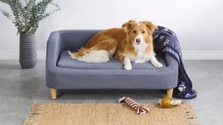 Aldi Australia Is Selling Dog-Sized Couches So That Your Pet Can Stay Off Your Sofa