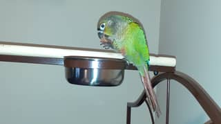 Parrot Hailed Hero For Squawking 'Fire' And Alerting Family To Blaze