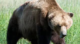 Bear Sentenced To Death For Mauling Father And His Son During Hike