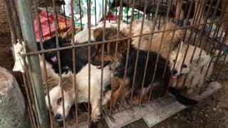 China's Controversial Yulin Dog Meat Festival Goes Ahead Despite New Law