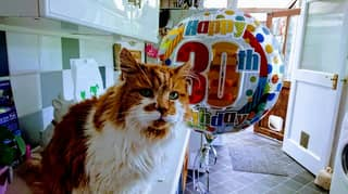 Owner Pays Tribute As 'World's Oldest Cat' Dies Aged 31