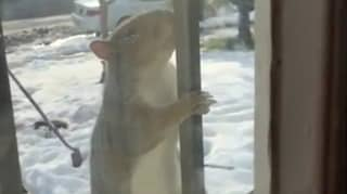 Aggressive Squirrels Terrorising And Injuring Residents In New York Neighbourhood