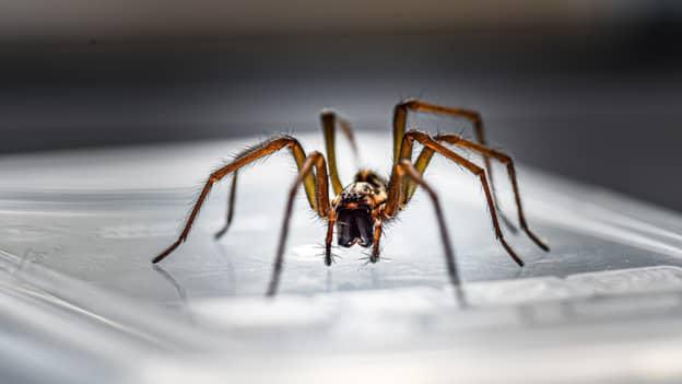 TikToker's Hack To Help Keep Spiders Away This Mating Season