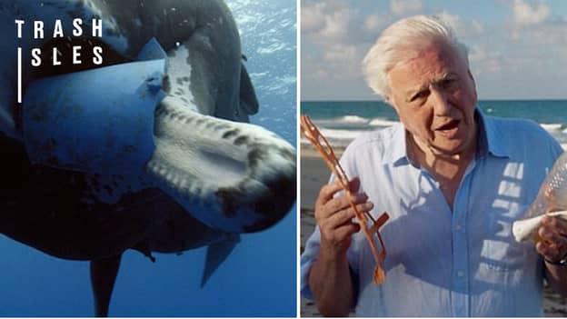 Oceans Under 'Biggest Threat in Human History', Warns Sir David Attenborough
