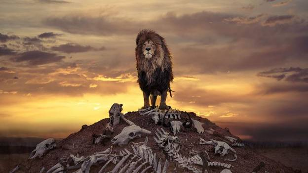 Incredible Photo Shows Proud Lion Standing On Hill Of Bones