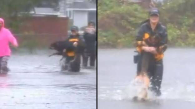 Hero Reporter Interrupts Live Broadcast To Save Dog From Floods