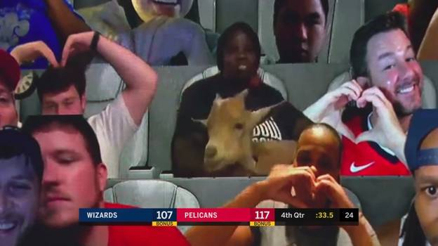 Virtual Fan Brings Goat To NBA Pelicans Game