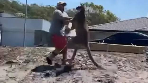Watch The Moment This Australian Dad Took A Beating From A Kangaroo