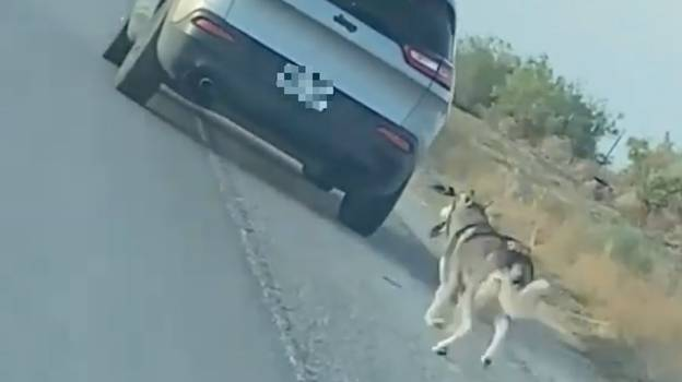 Man Arrested For Dumping And Abandoning Husky On The Side Of The Road