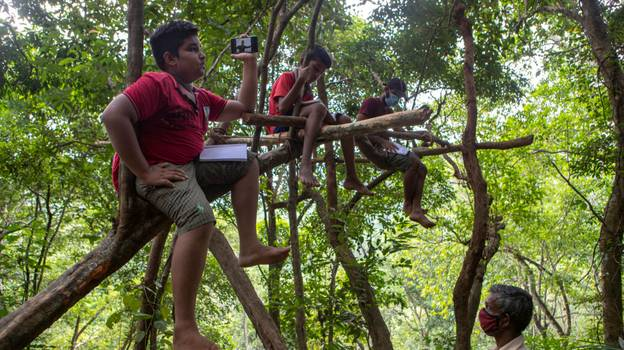 Sri Lankan Children Forced To Climb Trees To Get Internet For School