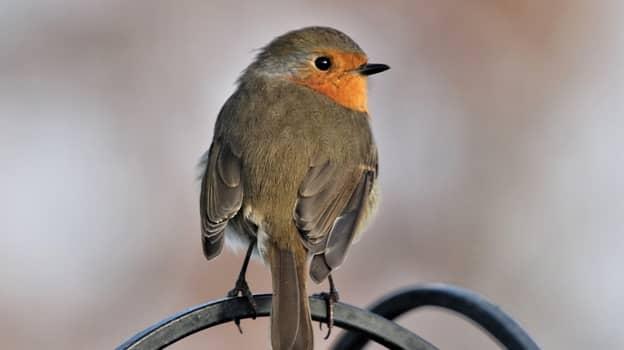 'Beautiful Little' Bird Dies After Being Stuck In A Glue Trap