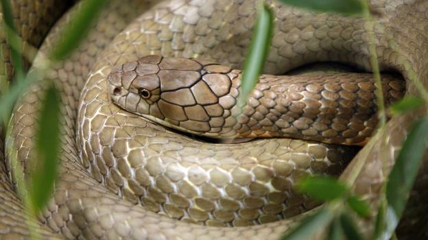 Humans Could Become Venomous In The Future, Study Claims