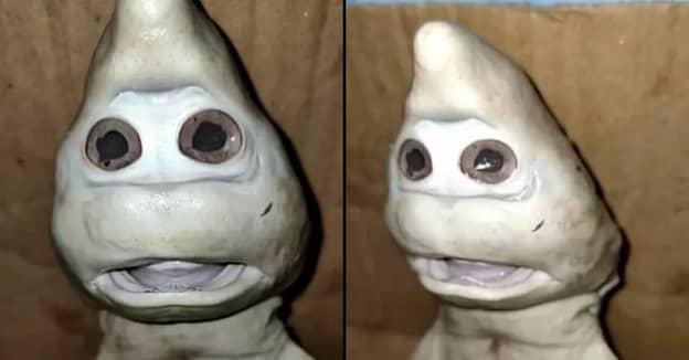 Fisherman Baffled By Baby Shark With Strange 'Human Face'
