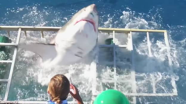 Heart-Stopping Moment Shark Breaks Through Cage With Diver Still Inside