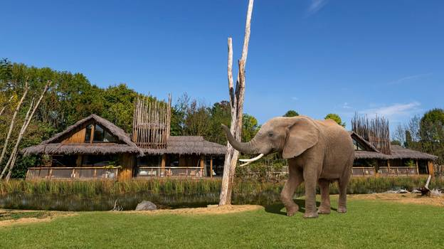 You Can Soon Stay In UK Safari Lodges And See Elephants From Your Room