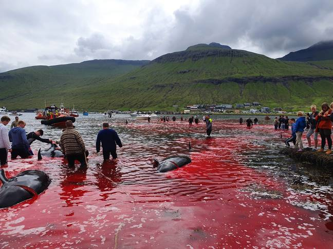 23 whales were killed. Credit: Triangle News