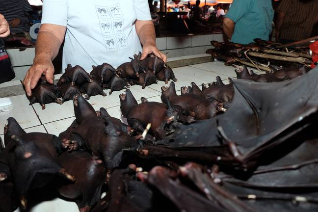 Pictures from February 2020 show bats being sold at Tomohon Market. Credit: Shutterstock