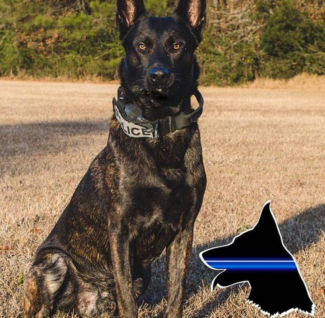 Fang. Credit: Jacksonville Sheriff's Office