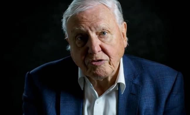 Sir David Attenborough has seen it all. Credit: PA