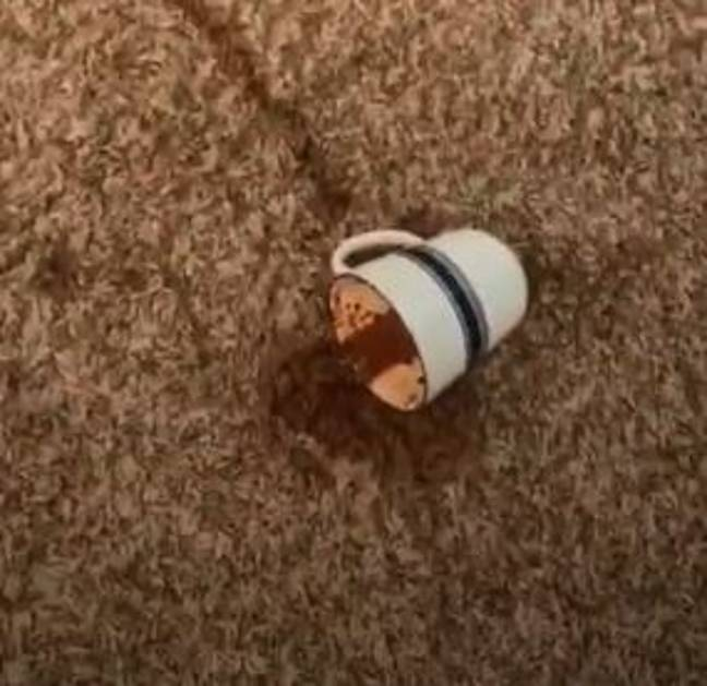 The cup on the floor. Credit: ViralHog