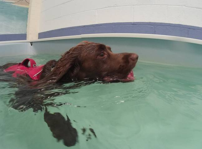 Bracken at a swimming lesson. Credit: SWNS