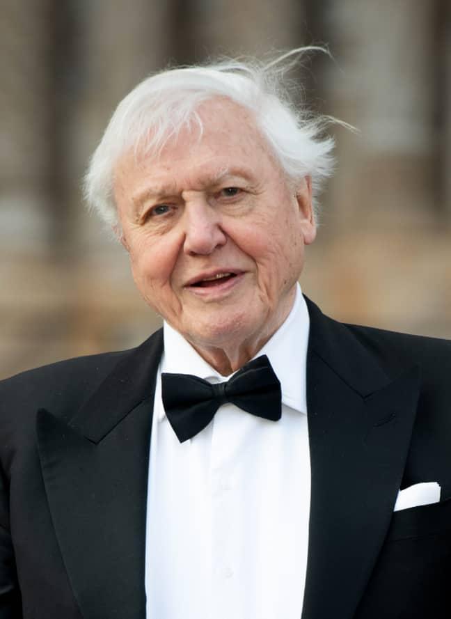 David Attenborough. Credit: PA