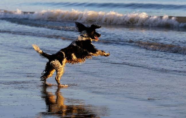 Stock image of dog. Credit: PA