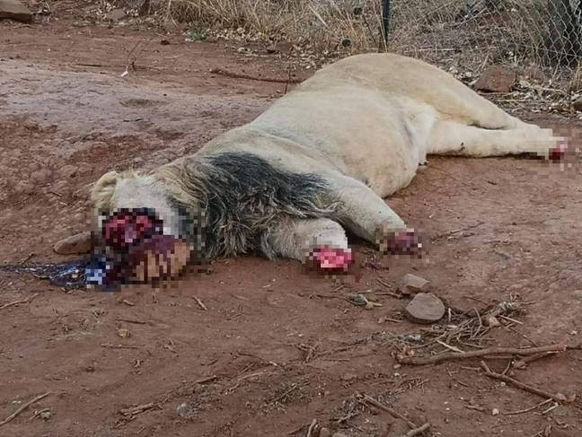 Credit: Facebook/Akwaaba Predator Park