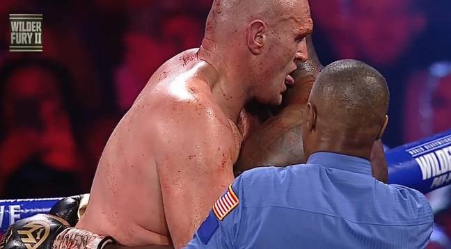 Fury licking Wilder's blood