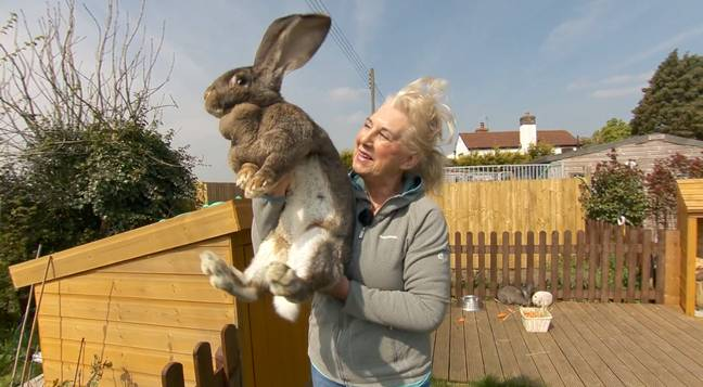 Daisy, another of Annette's rabbits. Credit: YouTube