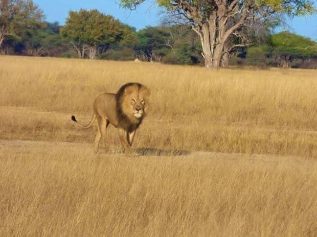 Credit: The Hide, Zimbabwe Safari Lodge/Facebook
